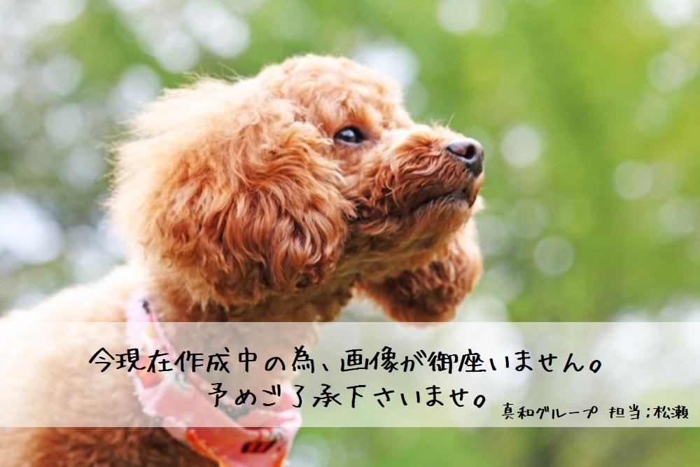 No Photo-min